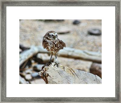 Coy Framed Print by Tammy Espino