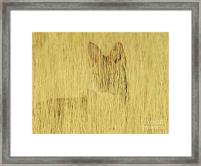 Coyote 1 Framed Print