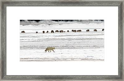 Framed Print featuring the digital art Coyote And Bison by Kae Cheatham
