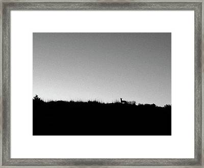 Coyote At Sunrise Framed Print by Mary Lee Dereske