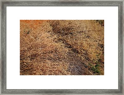 Coyote Brush Framed Print