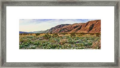 Coyote Canyon Sweet Light Framed Print