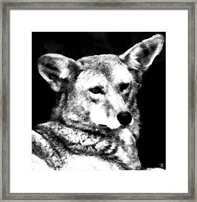 Coyote Charcoal Framed Print by Debra     Vatalaro