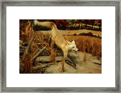 Framed Print featuring the digital art Coyote  by Chris Flees
