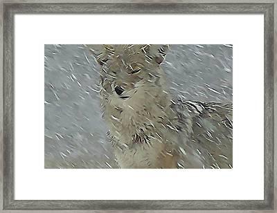 Coyote In Winter Framed Print by Errol Savage