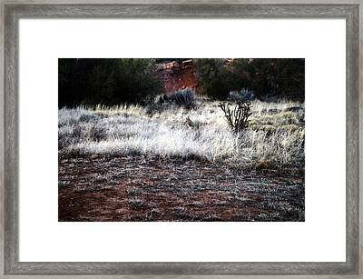 Framed Print featuring the photograph Coyote by Joseph Frank Baraba