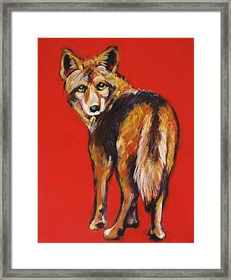 Coyote Looking Back Framed Print