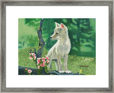 Coyote Pup Framed Print by Terry Lewey