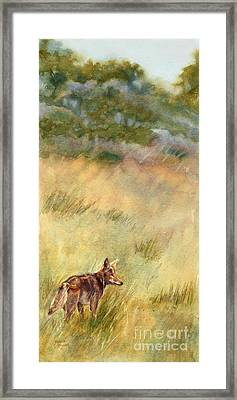 Coyote Santa Rosa Plateau Framed Print by Bonnie Rinier