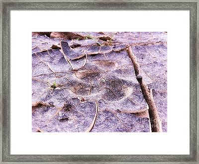 Coyote Tracks Power Of Grass Punching Thru The Mudpack. Framed Print by Spencer Lines
