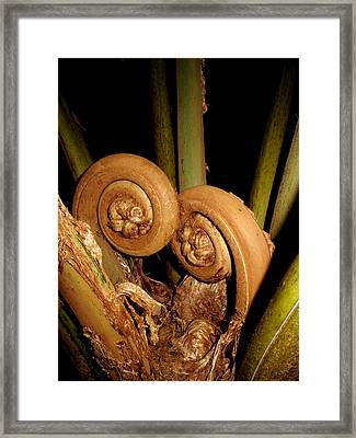 Cozy Fiddle Head Ferns Framed Print by Brendan Reals