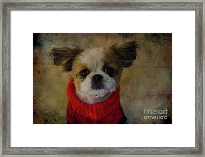Cozy Sadie Framed Print by Al Bourassa