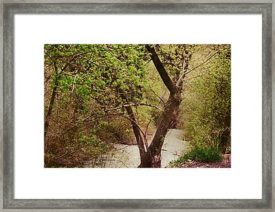 Cozy Stream In American Fork Canyon Utah Framed Print