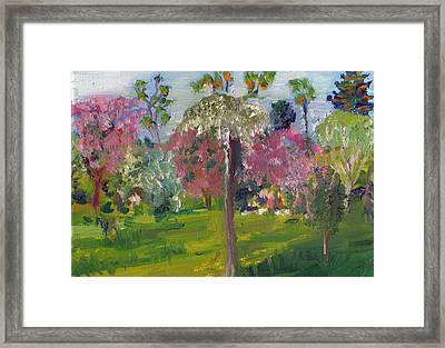 Crab Apple Blossom Time Framed Print