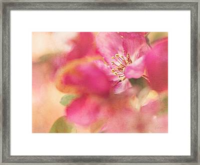 Crab Apple Blossoms II Framed Print