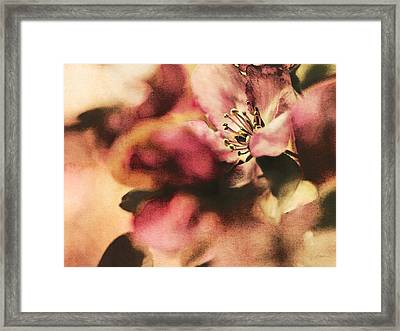 Crab Apple Blossoms IIi Framed Print