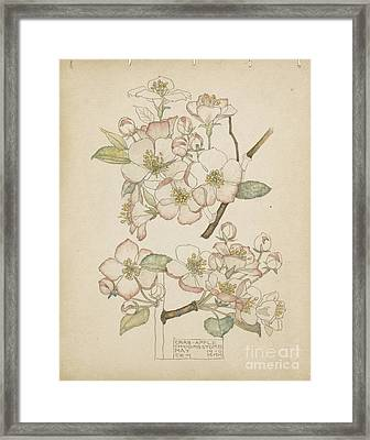 Crab Apple Framed Print by Celestial Images