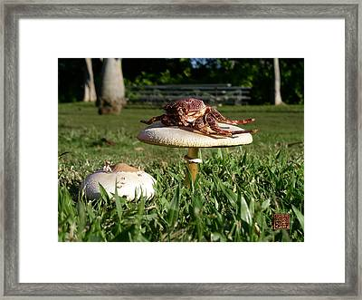Crab Grass Framed Print