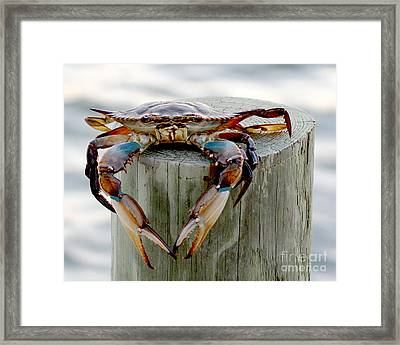 Crab Hanging Out Framed Print