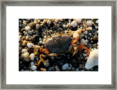 Crab On The Beach Framed Print