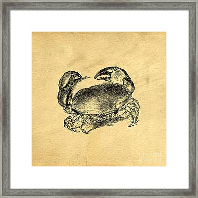 Framed Print featuring the drawing Crab Vintage by Edward Fielding