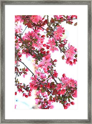 Crabapple Beauty Framed Print