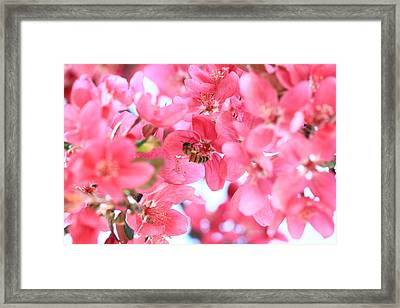 Framed Print featuring the photograph Crabapple Bees 2 by Rick Morgan