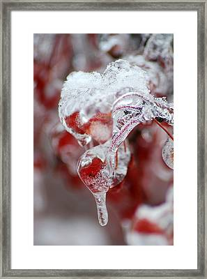 Crabapple Berry In Ice Framed Print by Steven Geer