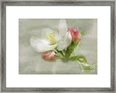 Crabapple Blossom 3 Framed Print
