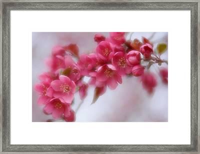Crabapple Blossom - Dark Pink Framed Print