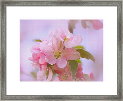 Crabapple Pink Framed Print by MTBobbins Photography
