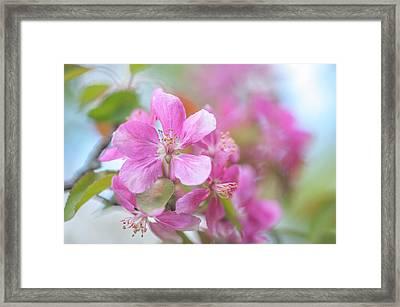 Crabapple Tree Bloom Framed Print by Jenny Rainbow