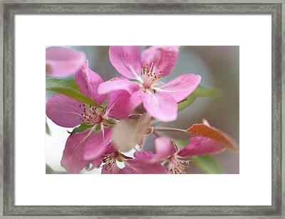 Crabapple Tree  Pink Flowers Framed Print by Jenny Rainbow