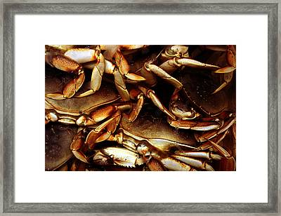 Crabs Awaiting Their Fate Framed Print