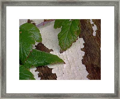Cracked Up Framed Print by Angi Parks