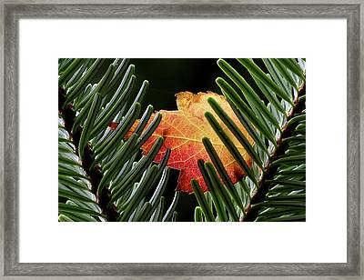 Cradled Framed Print