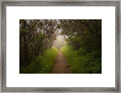 Craggy Pinnacle Trail Blue Ridge Parkway Framed Print