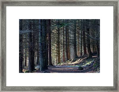 Framed Print featuring the photograph Craig Dunain - Forest In Winter Light by Karen Van Der Zijden