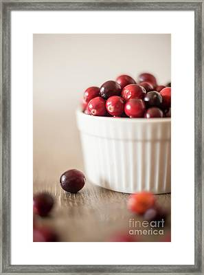 Cranberries 1 Framed Print by Taylor Martinsen