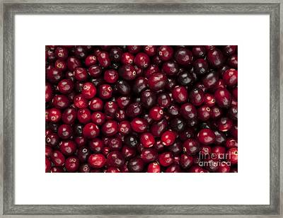 Cranberries Framed Print by Elena Elisseeva