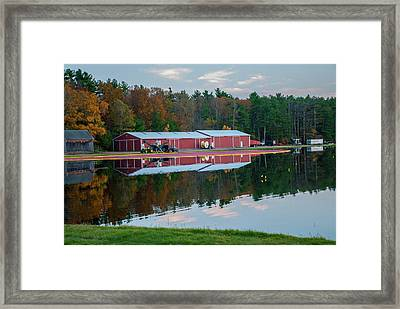 Cranberries Floating On The Bog Framed Print