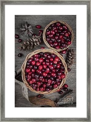 Cranberries In Baskets Framed Print by Elena Elisseeva