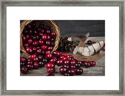 Cranberries Still Life Framed Print by Elena Elisseeva