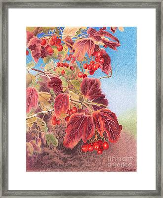 Cranberry Bush In Autumn Framed Print by Elizabeth Dobbs