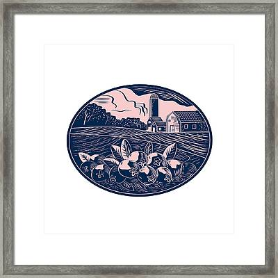 Cranberry Fruit Farm Oval Woodcut Framed Print