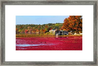 Cranberry Juice Framed Print by Gina Cormier