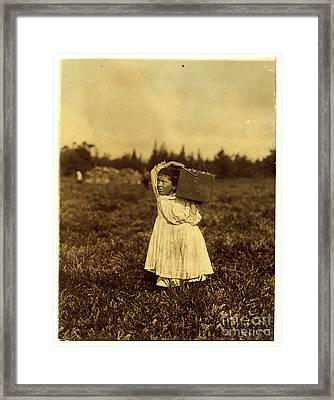 Cranberry Picker Framed Print