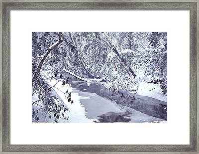 Cranberry River Winter Heavy Snow Framed Print by Thomas R Fletcher