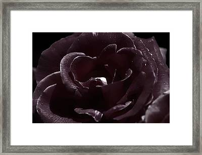 Cranberry Rose Framed Print by Clayton Bruster