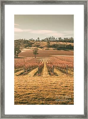 Cranbrook Vineyard Framed Print by Jorgo Photography - Wall Art Gallery